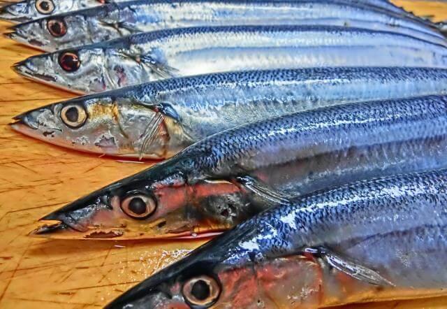 鮮魚 バイト